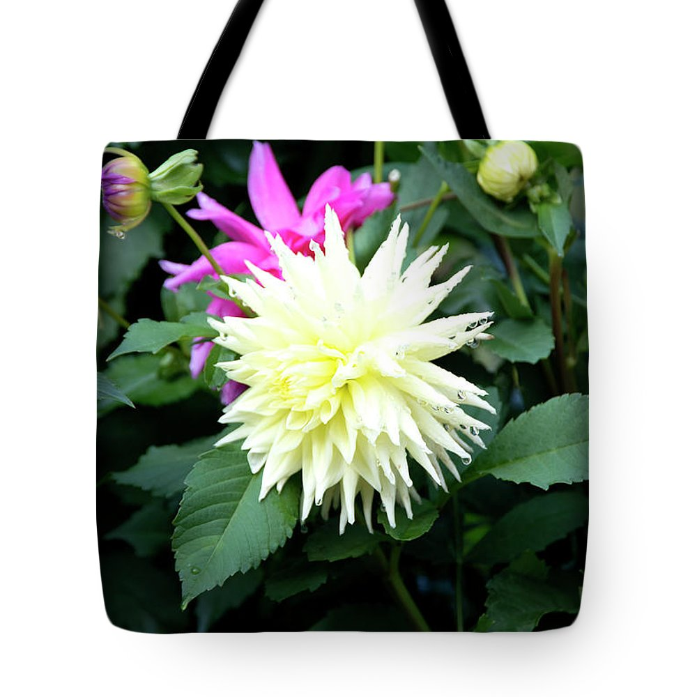 Outdoor Tote Bag featuring the photograph Beautiful And Fresh Dahlias In The Butchrt Gardens,vancouver Island 2. by Andrew Kim