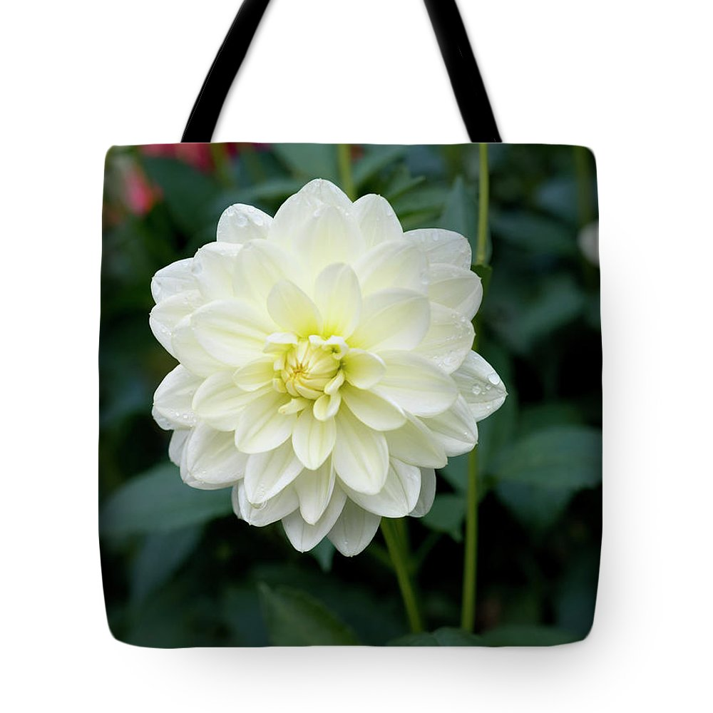 Outdoor Tote Bag featuring the photograph Beautiful And Fresh Dahlias In The Butchrt Gardens,vancouver Island 3. by Andrew Kim