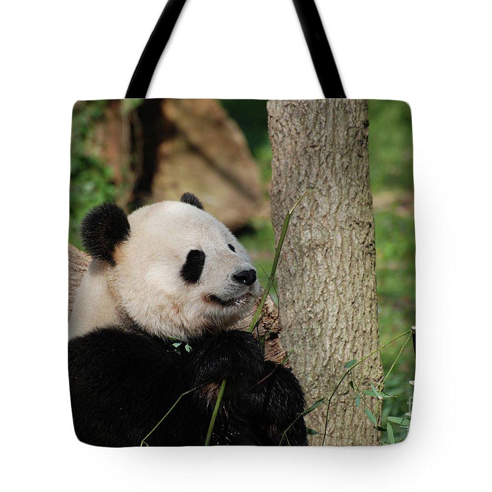 Panda Tote Bag featuring the photograph Beautiful Giant Panda Bear In The Wild by DejaVu Designs