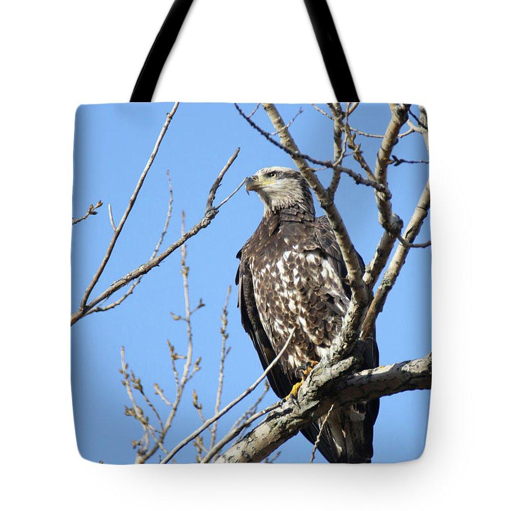 Juvenile Eagle Tote Bag featuring the photograph Beautiful Juvenile Eagle by Brook Burling
