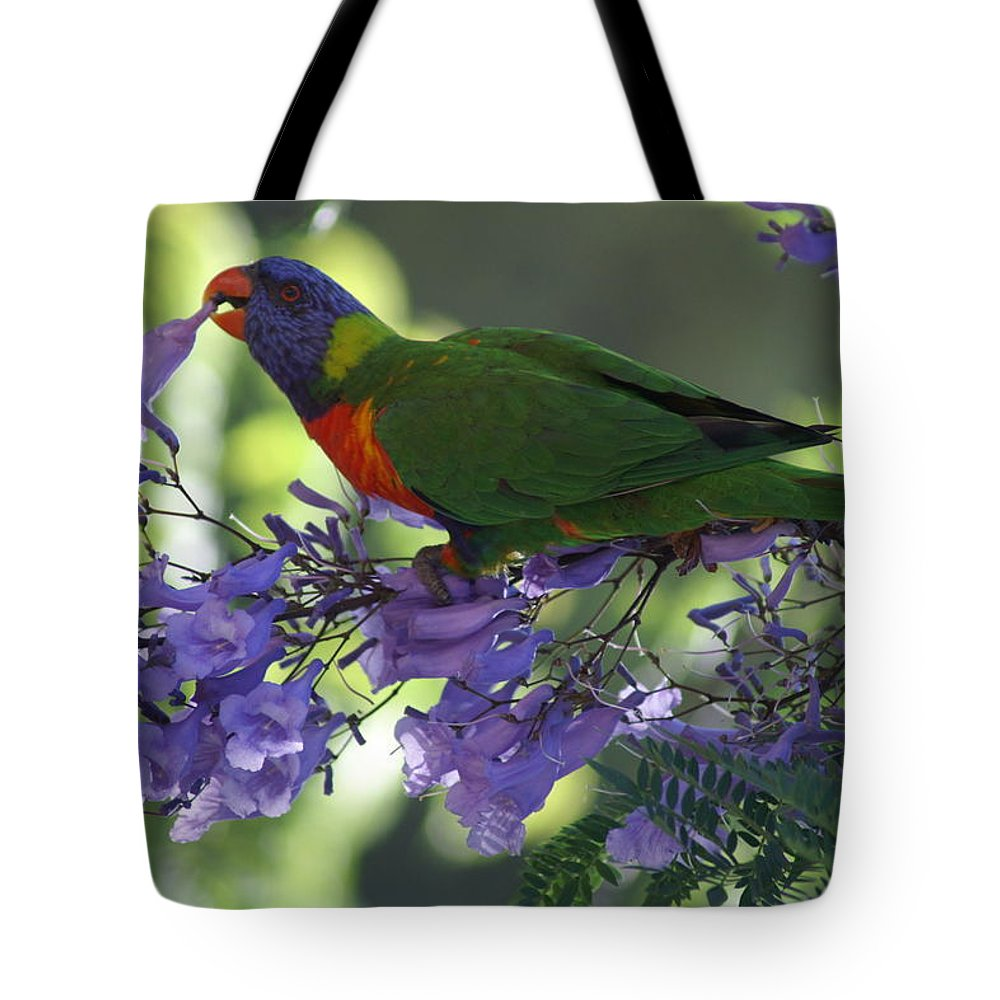 Parrot Tote Bag featuring the photograph Beautiful Lorikeet by Brian Leverton