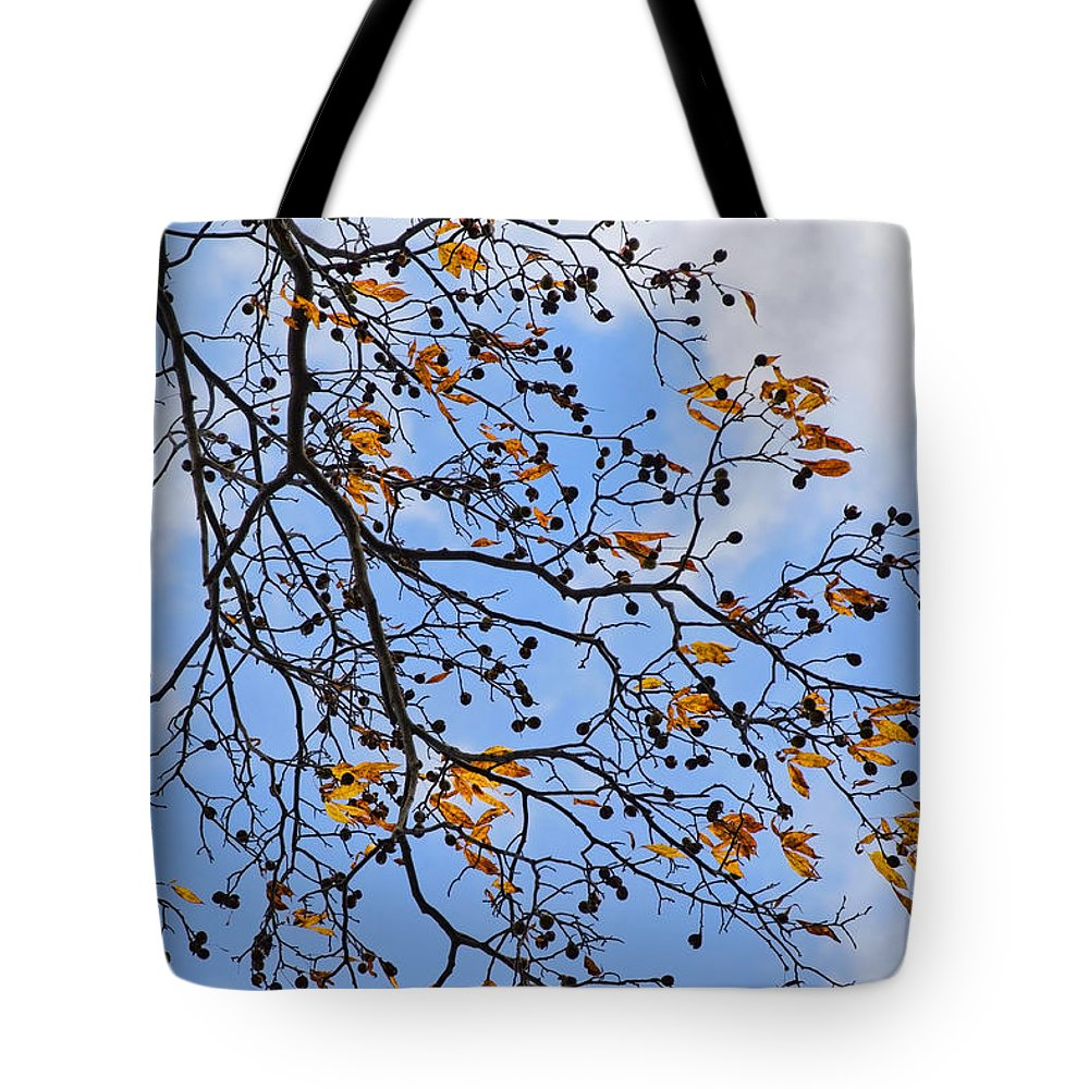 Nature Tote Bag featuring the photograph Decorative Tree Branch by Christina Rollo