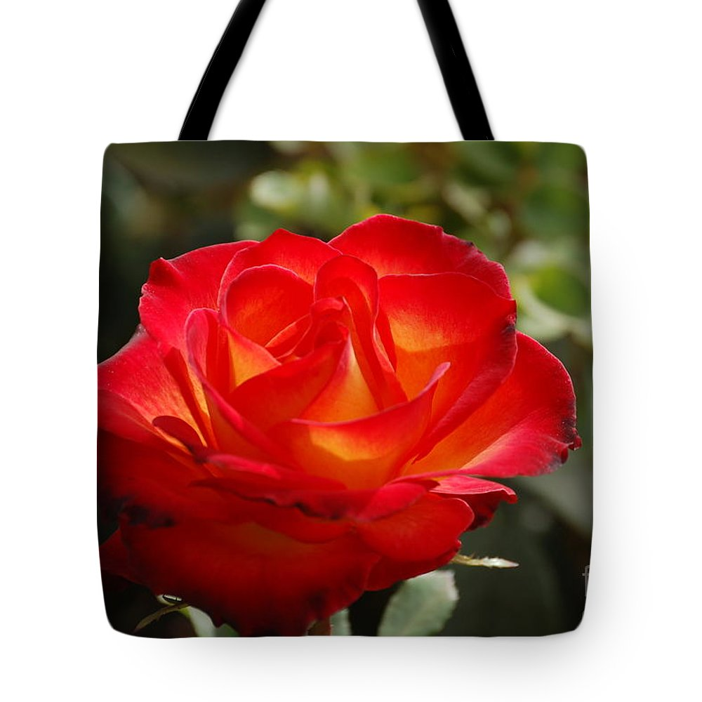 Rose Tote Bag featuring the photograph Beautiful Rose by Frank Stallone