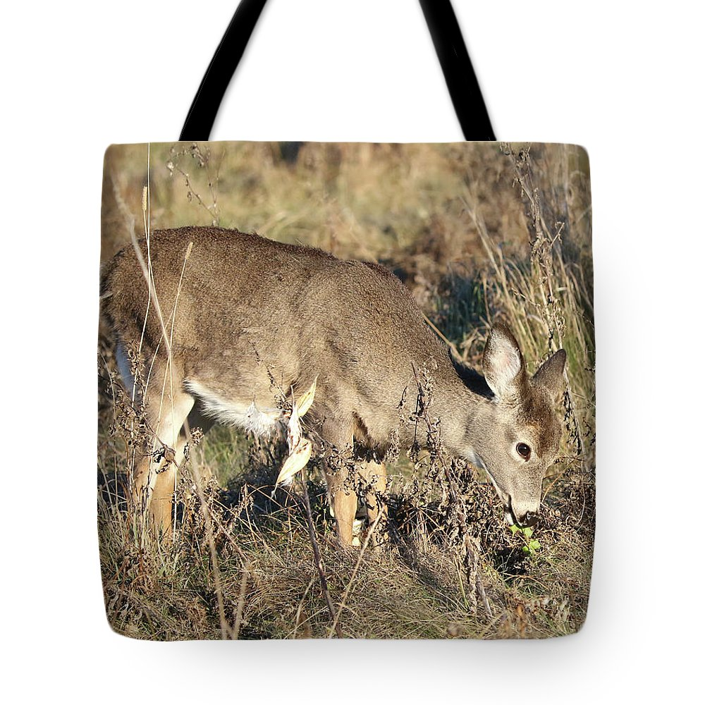 White-tailed Deer Tote Bag featuring the photograph Beautiful Young Deer by Doris Potter