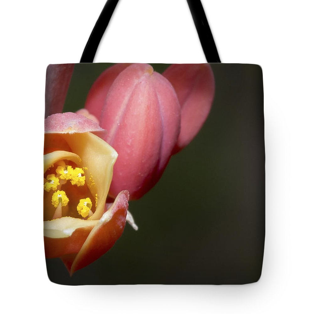 Beauty Tote Bag featuring the photograph Beauty Emerges by Barbara Fagan Sullivan