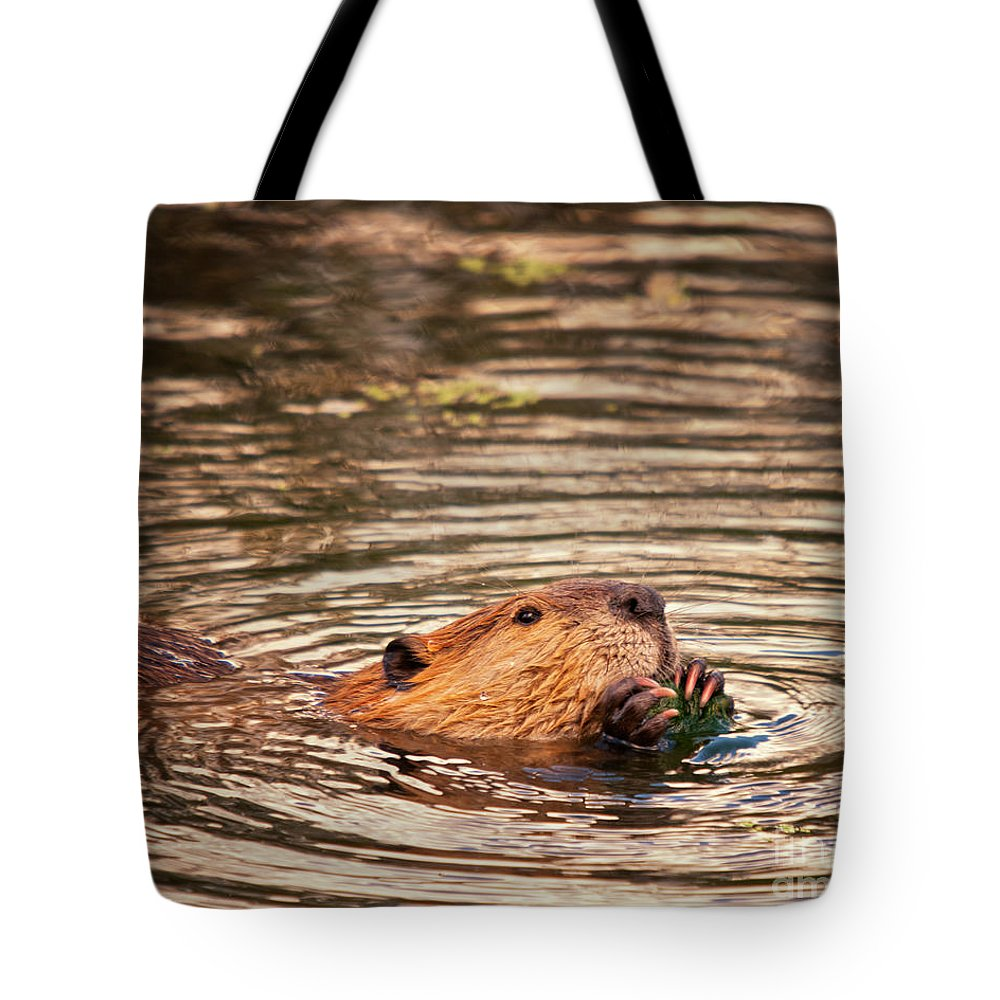 Beaver Tote Bag featuring the photograph Beaver Feeding by Timothy Flanigan and Debbie Flanigan Nature Exposure