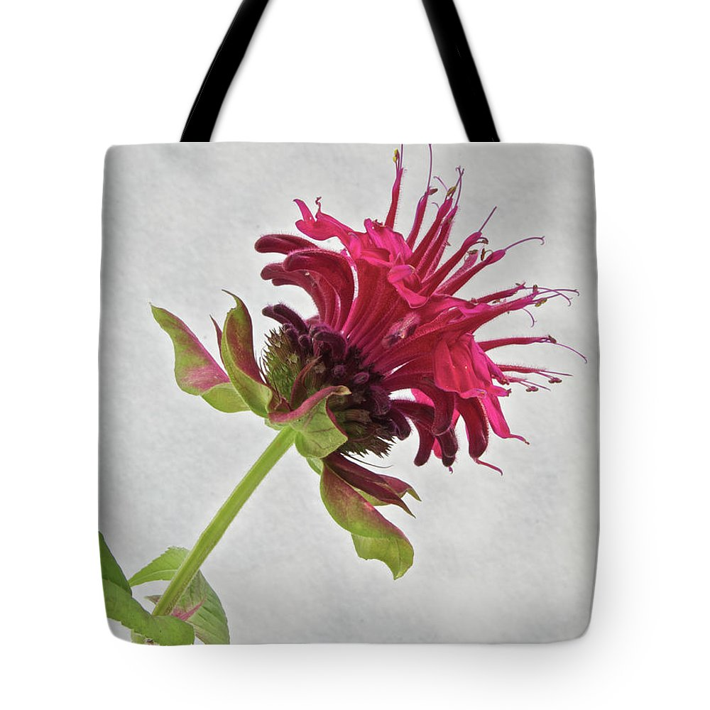Bee Balm Tote Bag featuring the photograph Bee Balm by Michael Peychich