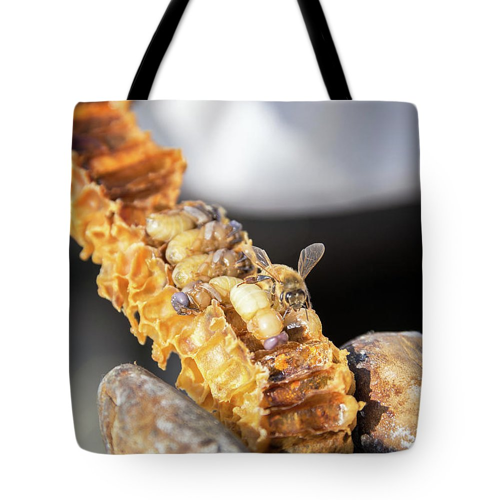 Bee Tote Bag featuring the photograph Bee Grubs and Bees by Jess Kraft