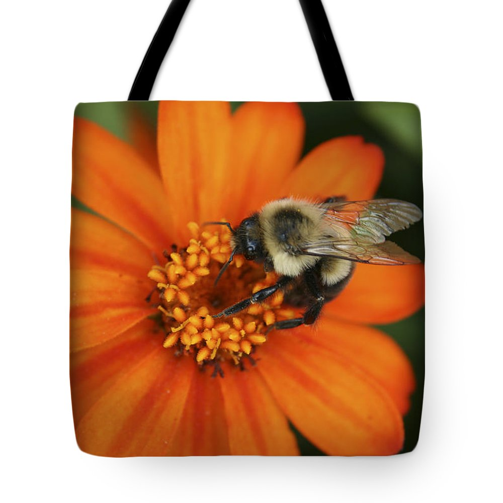 Bee Tote Bag featuring the photograph Bee On Aster by Margie Wildblood