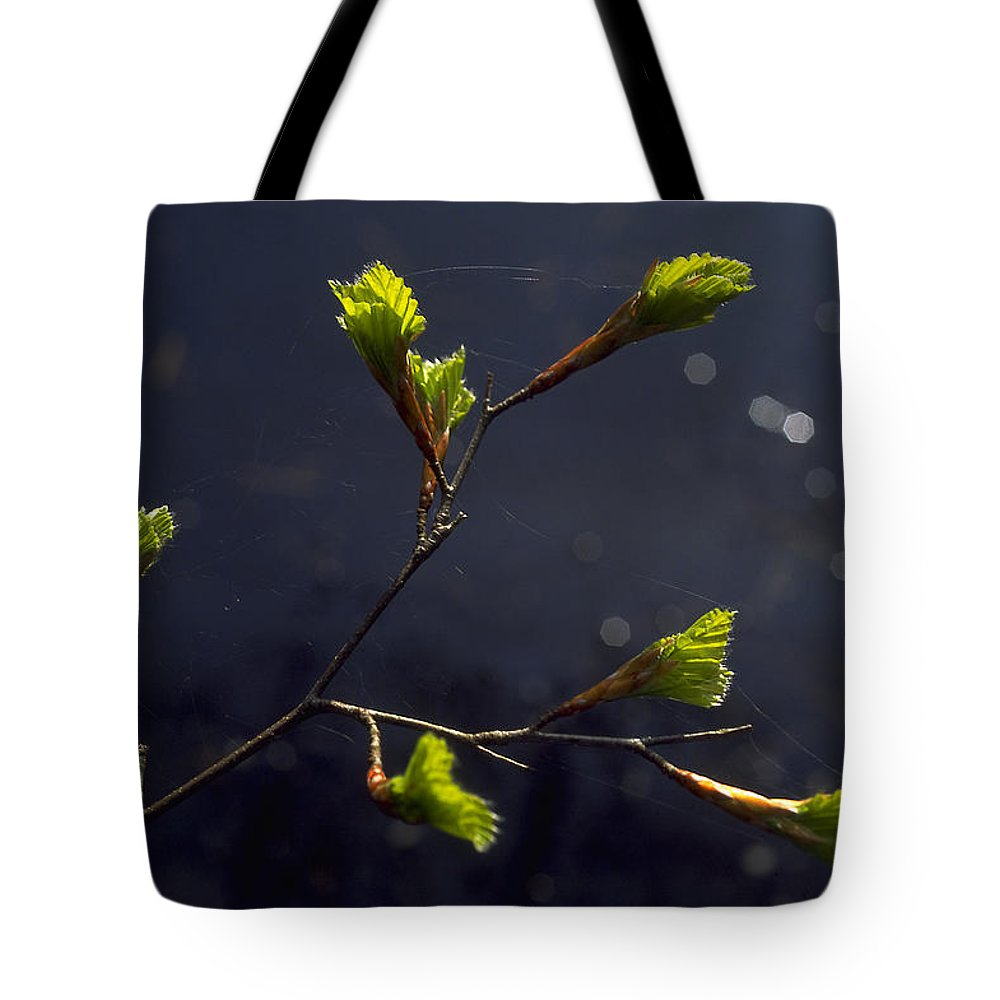 Green Tote Bag featuring the photograph Beech Buds by Michael Mogensen