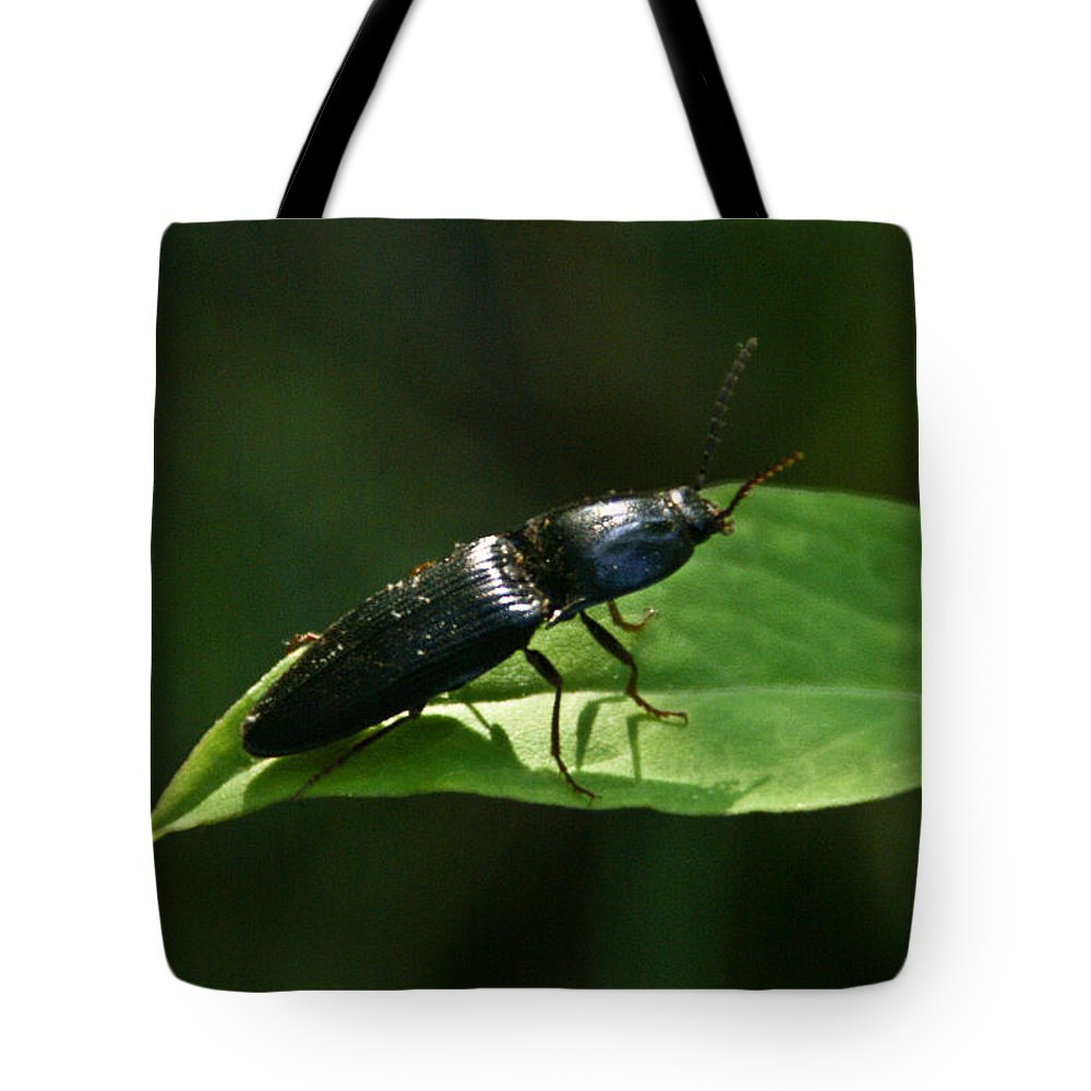 Beetle Tote Bag featuring the photograph Beetle At Sunrise by Douglas Barnett