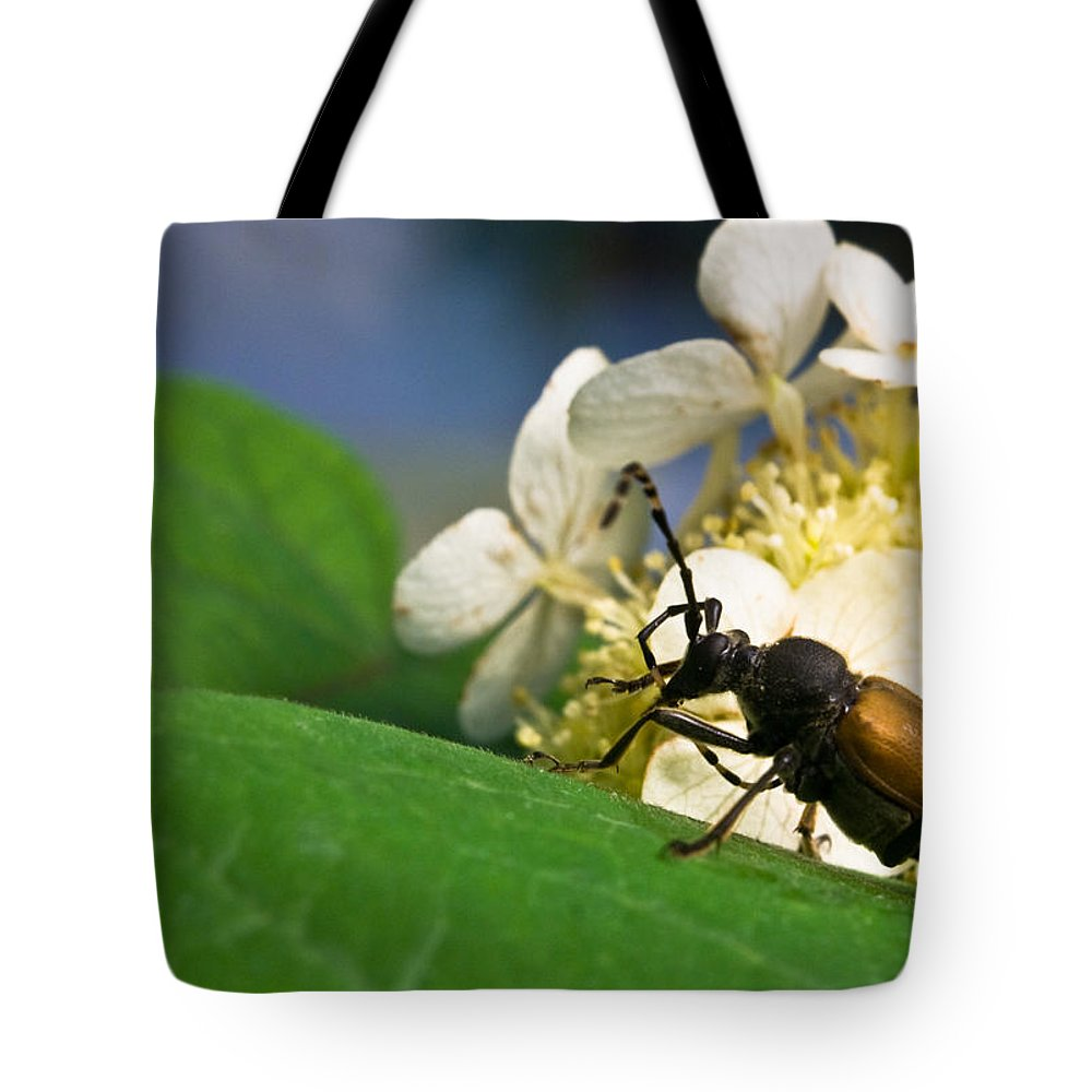 Crossville Tote Bag featuring the photograph Beetle Preening by Douglas Barnett