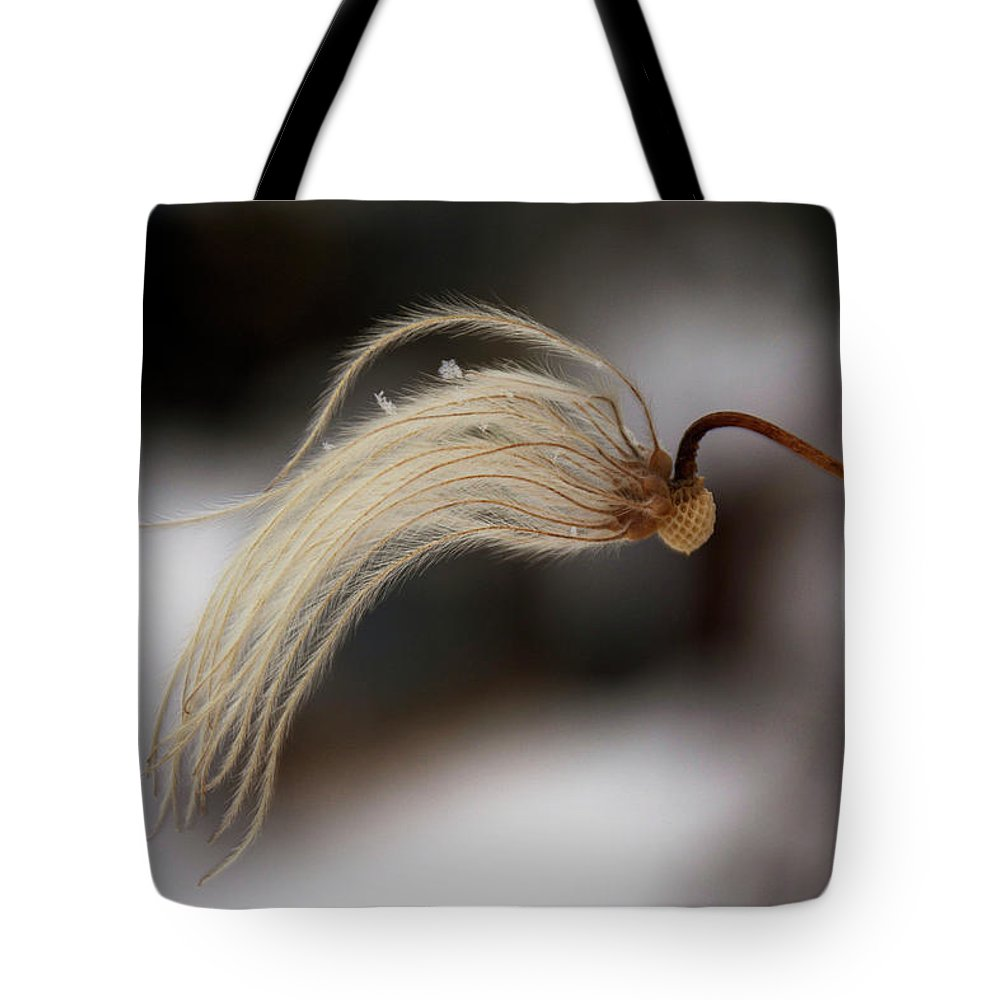 Clematis Tote Bag featuring the photograph Beginnings by Ellery Russell