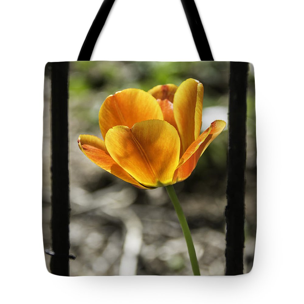 Flowers Tote Bag featuring the photograph Behind Bars by Teresa Mucha