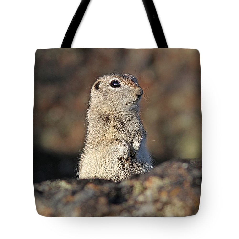 Belding Ground Squirrel Tote Bag featuring the photograph Belding Ground Squirrel by Gary Wing