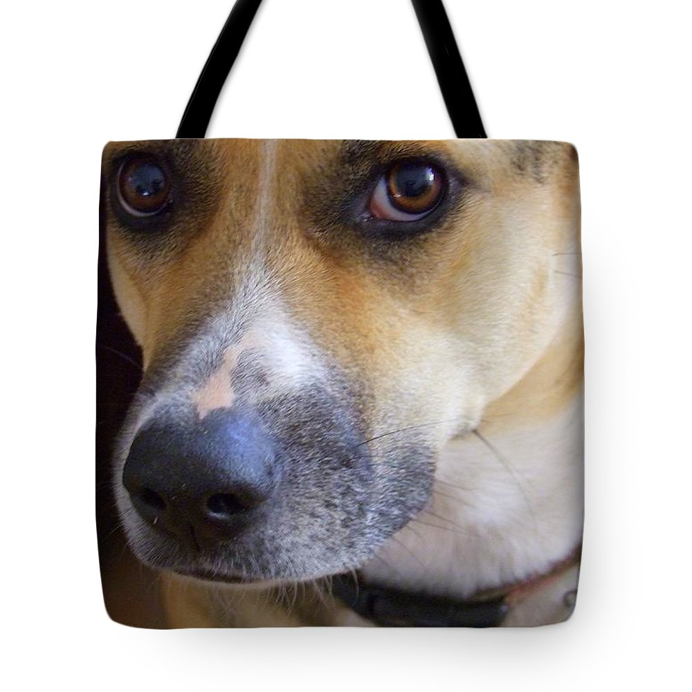 Kauai Animals Tote Bag featuring the photograph Bella by Mary Deal