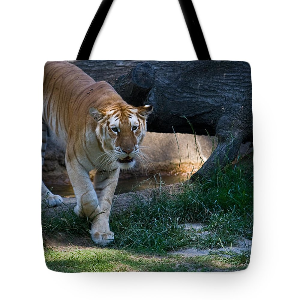 Bengal Tote Bag featuring the photograph Bengal Tiger On The Prowl by Douglas Barnett