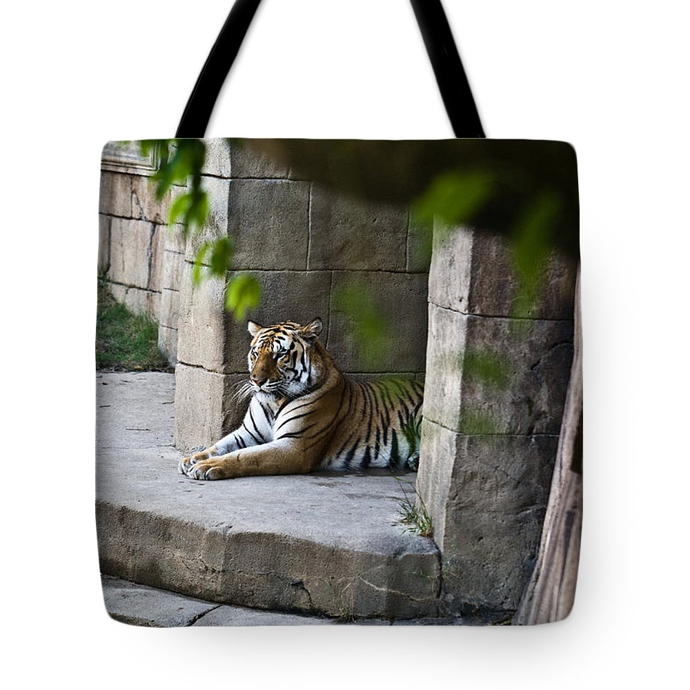 Bengal Tote Bag featuring the photograph Bengal Tiger Resting by Douglas Barnett