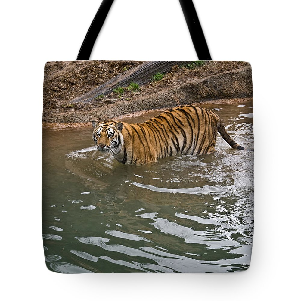 Bengal Tote Bag featuring the photograph Bengal Tiger Wading Stream by Douglas Barnett