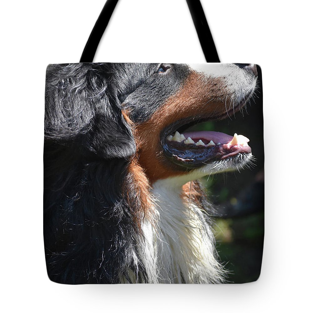 Bernese Mountain Dog Tote Bag featuring the photograph Bernese Mountain Dog Basking In The Sunshine by DejaVu Designs
