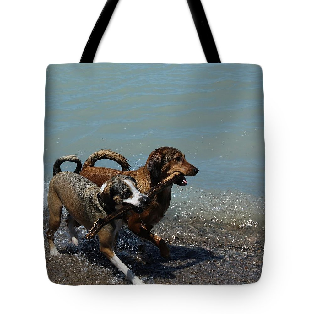 Dogs Tote Bag featuring the photograph Best Friends by Kaeleigh Gray