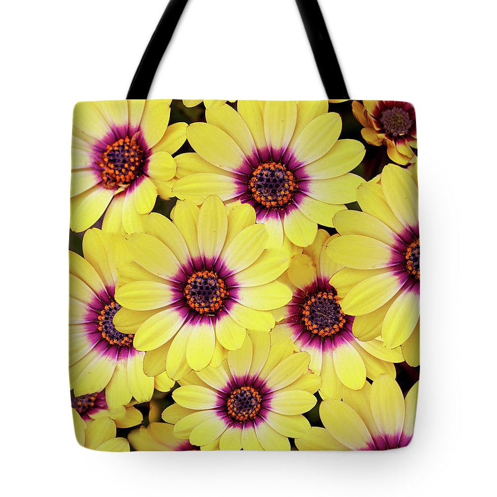 Daisies Tote Bag featuring the photograph Better Is Beautiful by Vanessa Thomas