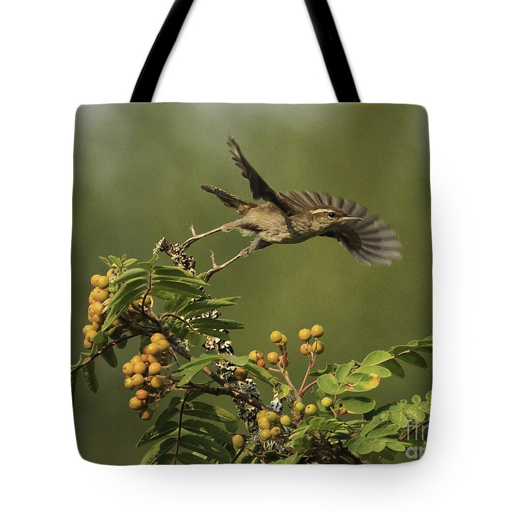 Washington Tote Bag featuring the photograph Bewick's Wren by Tim Hauf