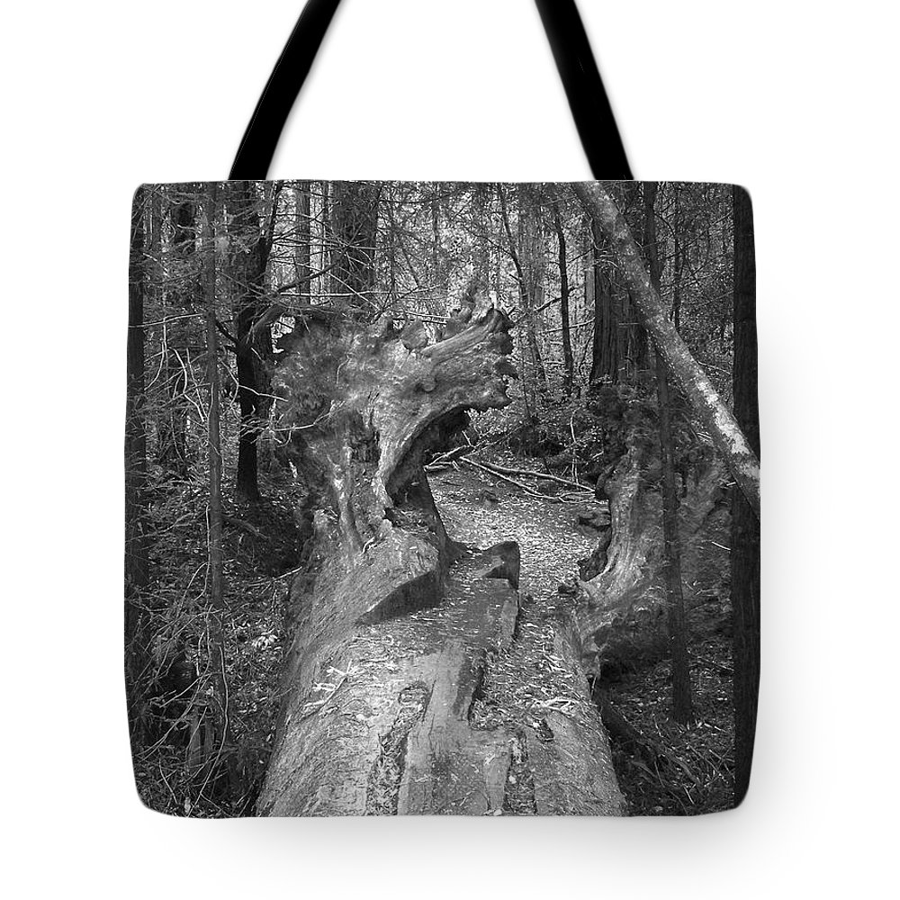 Landscape Tote Bag featuring the photograph Big Basin 2 by Karen W Meyer