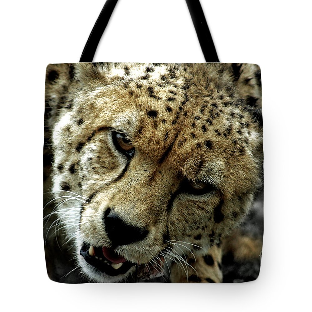 Cats Tote Bag featuring the photograph Big Cats 50 by Ben Yassa
