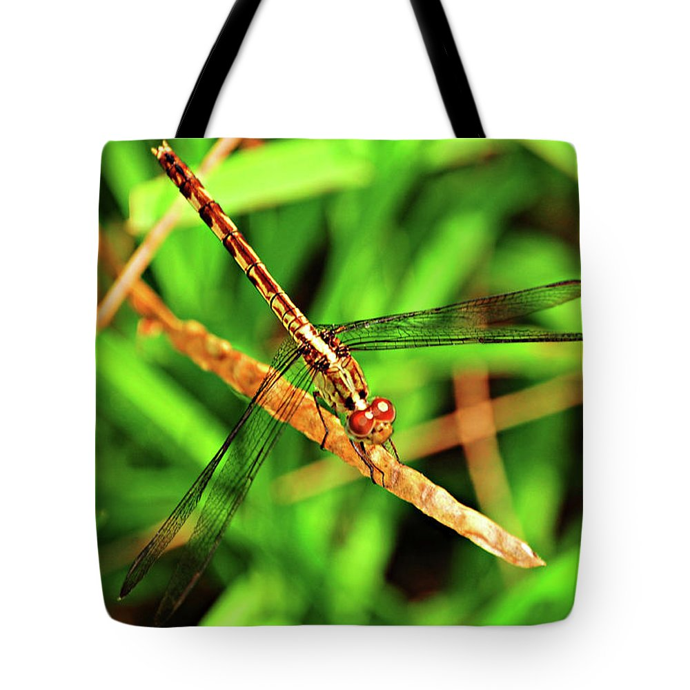 Dragonfly Tote Bag featuring the photograph Big Eyed Dragonfly by Randy Aveille