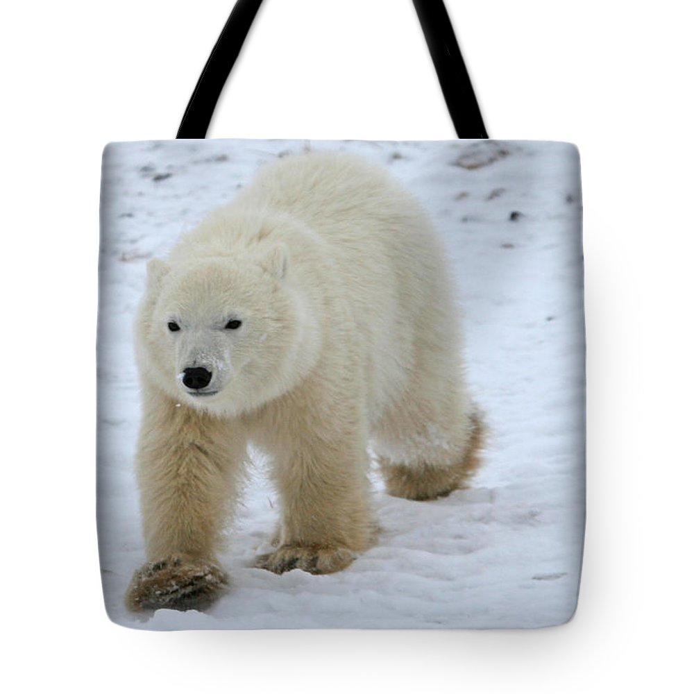 Polar Bear Tote Bag featuring the photograph Bigfoot by Connie Jeffcoat