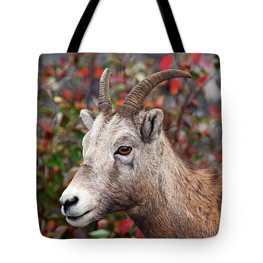 Jasper National Park Tote Bag featuring the photograph Bighorn Sheep by Larry Ricker