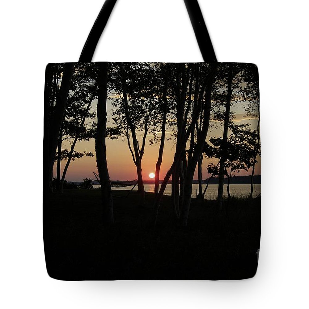 Birch Tote Bag featuring the photograph Birches Watch The Sunset by Faith Harron Boudreau