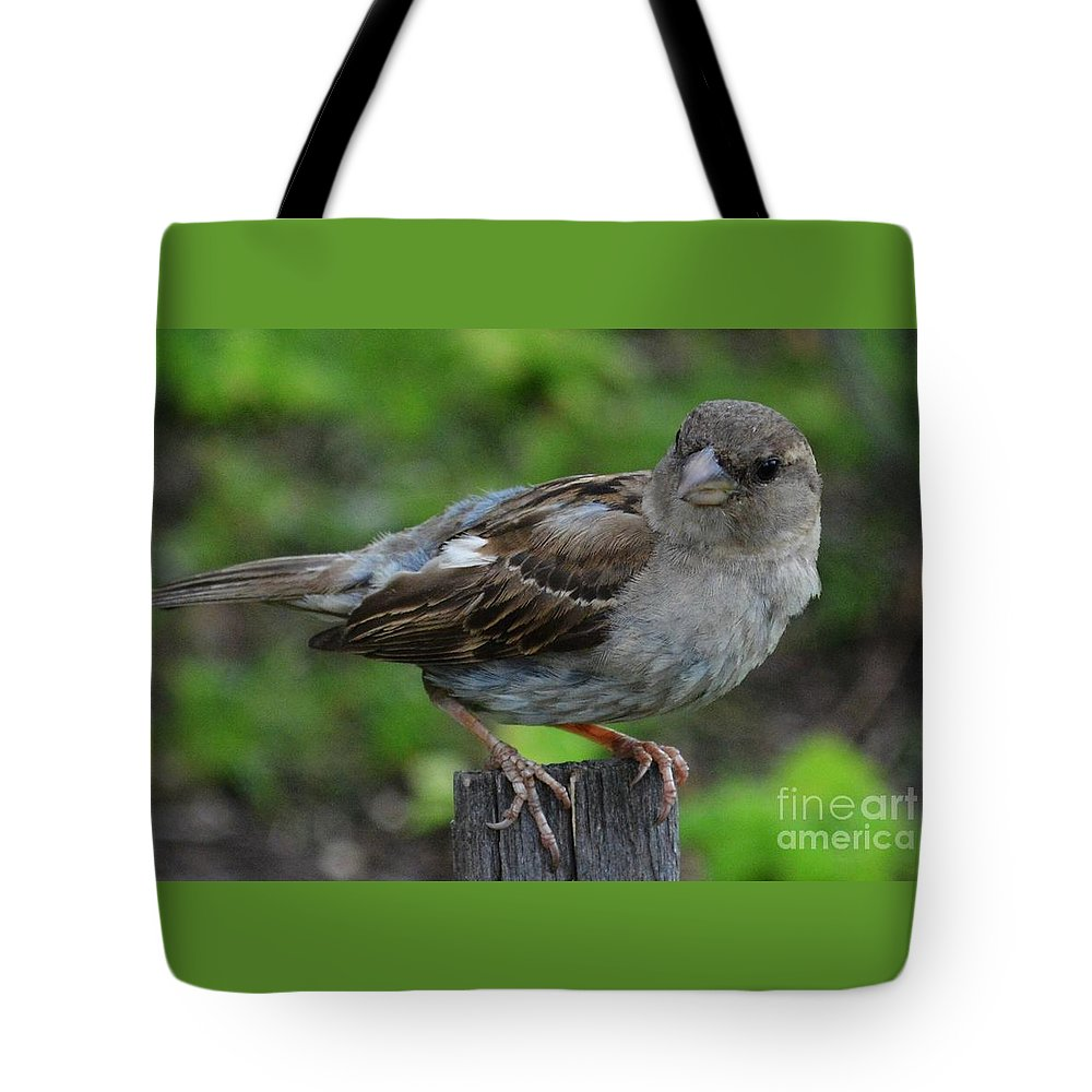 Black-crowned Night Heron Tote Bag featuring the photograph Bird 1 by Virginia Levasseur