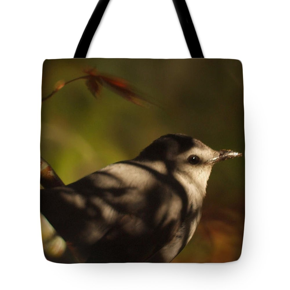 Leaves. Leaf Tote Bag featuring the photograph Bird In Tree With Young Leaf by Gary Bartoloni