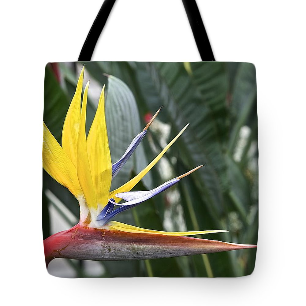 Bird Of Paradise Longwood Gardens Tote Bag featuring the photograph Bird Of Paradise Longwood Gardens by Mark Holden
