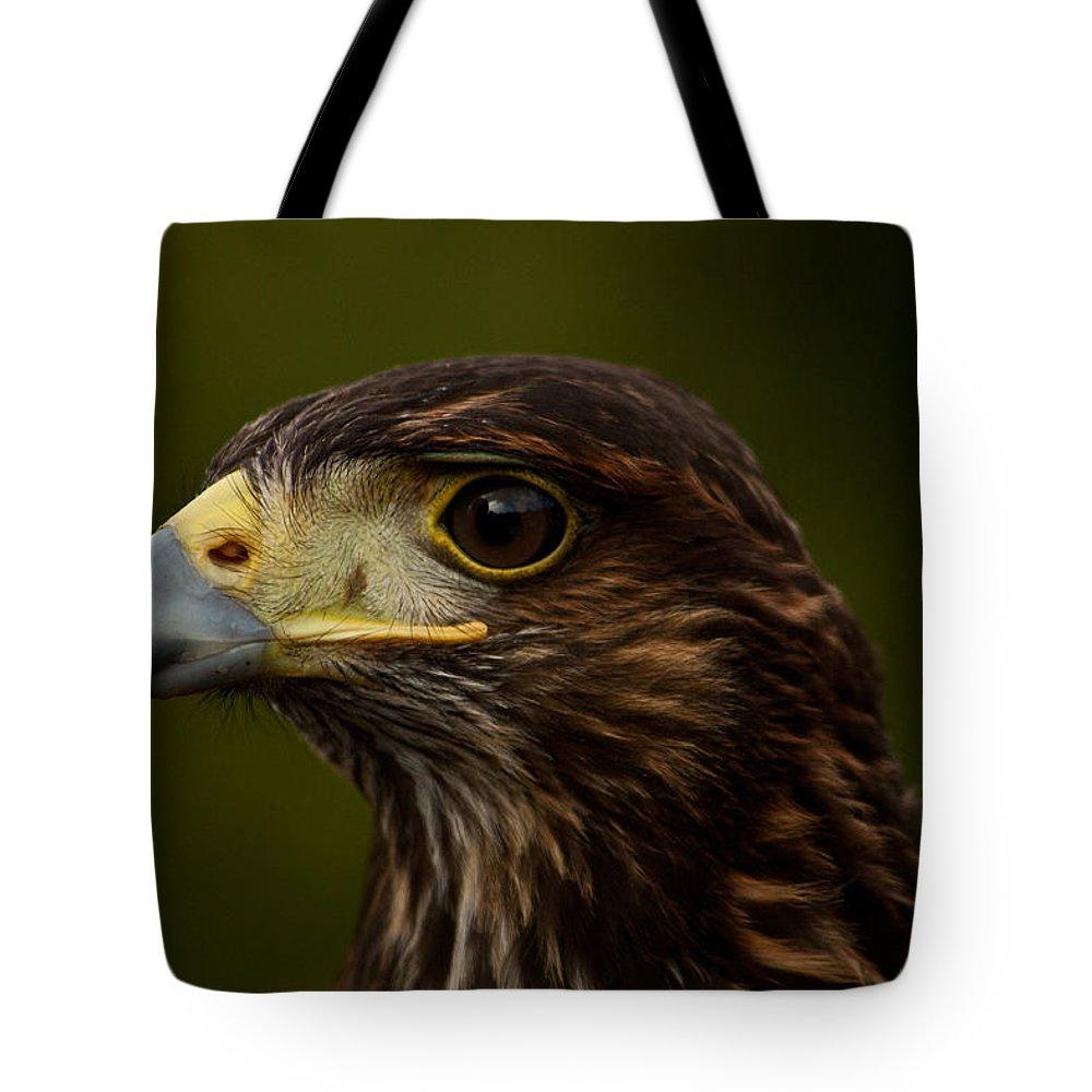 Bird Tote Bag featuring the photograph Bird Of Prey by Dawn OConnor