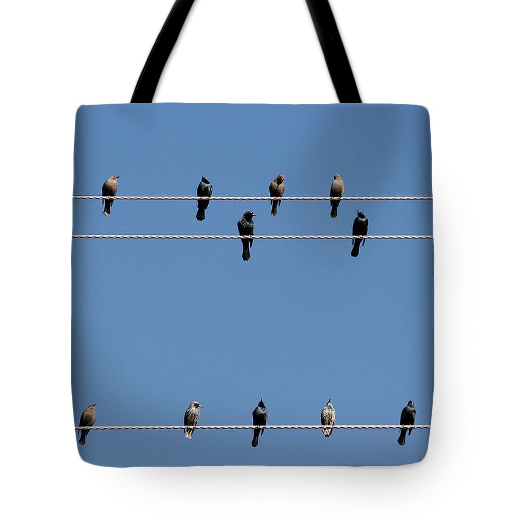 Birds Tote Bag featuring the photograph Bird On A Wire by Christine Till