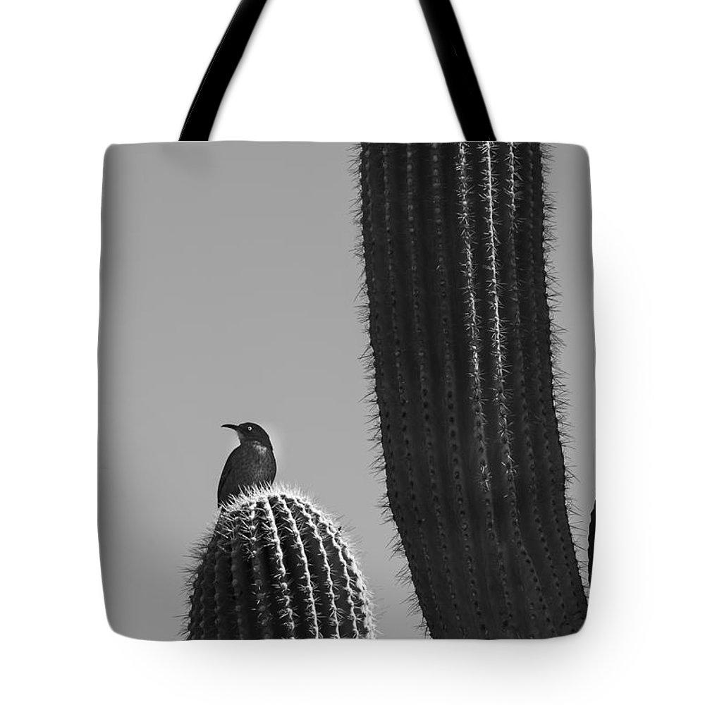 Desert Botanical Garden Tote Bag featuring the photograph Bird On Cactus by Richard J Thompson