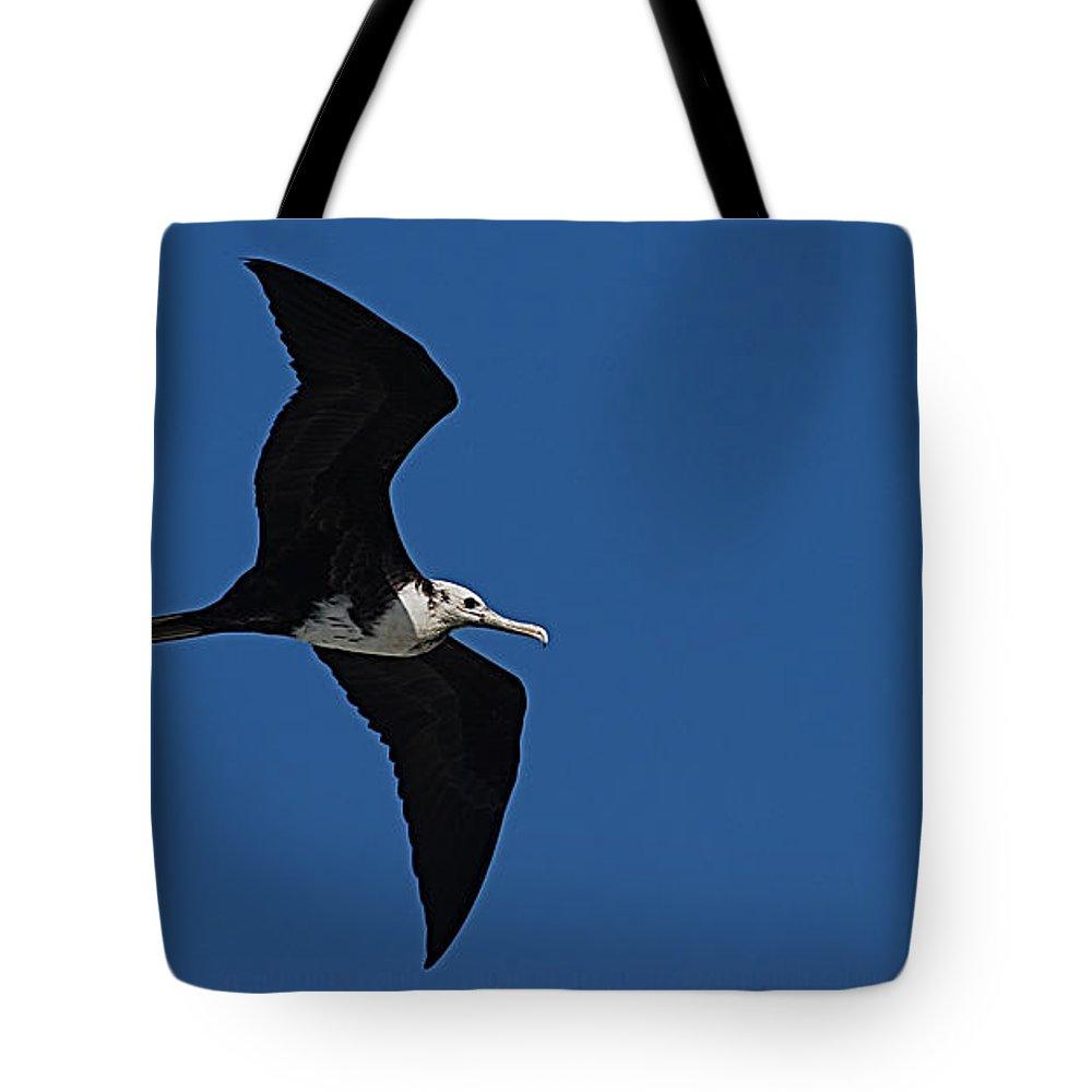 Bird Tote Bag featuring the photograph Bird by Galeria Trompiz