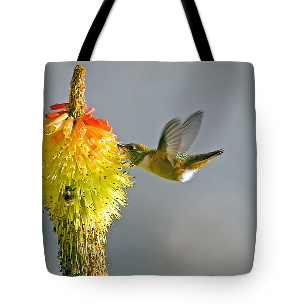 Hummingbird Tote Bag featuring the photograph Birds And Bees by Mike Dawson