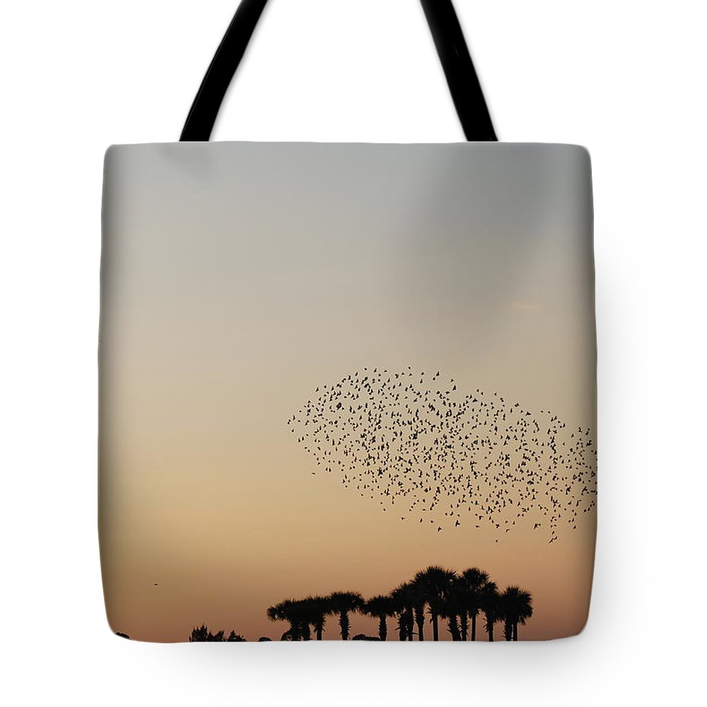 Nature Tote Bag featuring the photograph Birds In The Sun by Rob Hans