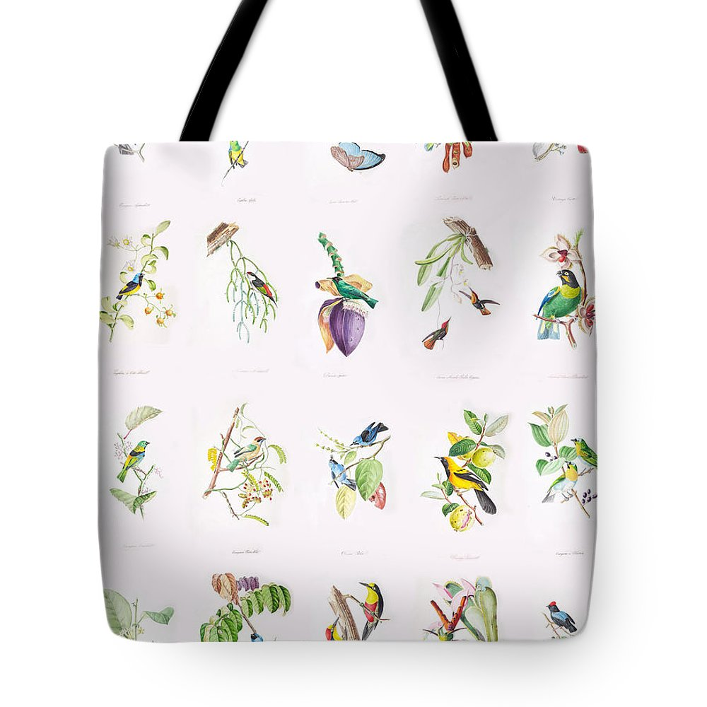 Birds Tote Bag featuring the painting Birds Of Brazil by Philip Ralley