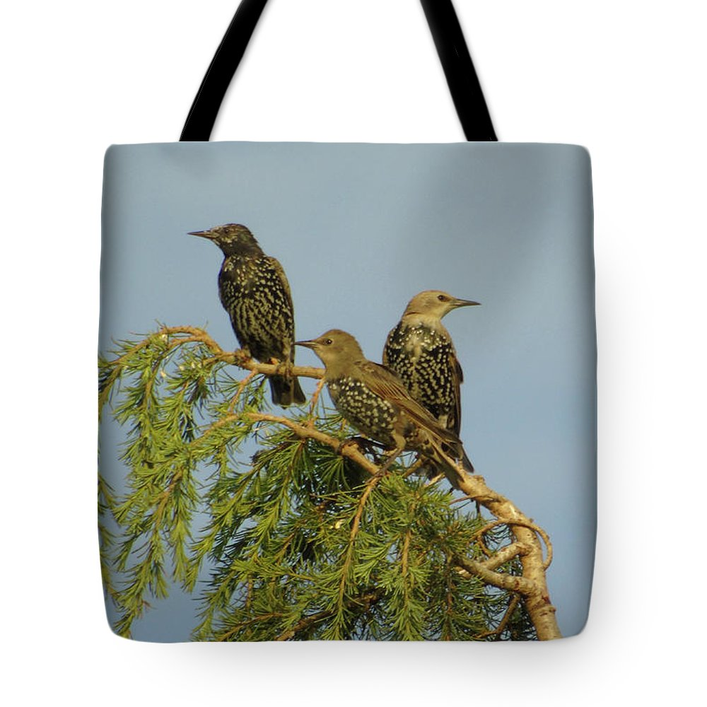 Three Tote Bag featuring the photograph Birds-on-watch by Gordon Auld