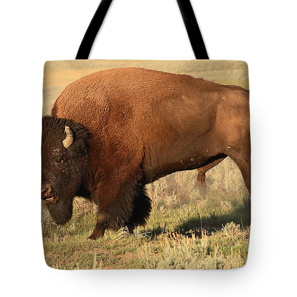 Bison Tote Bag featuring the photograph Bison Huffing And Puffing For Herd by Max Allen