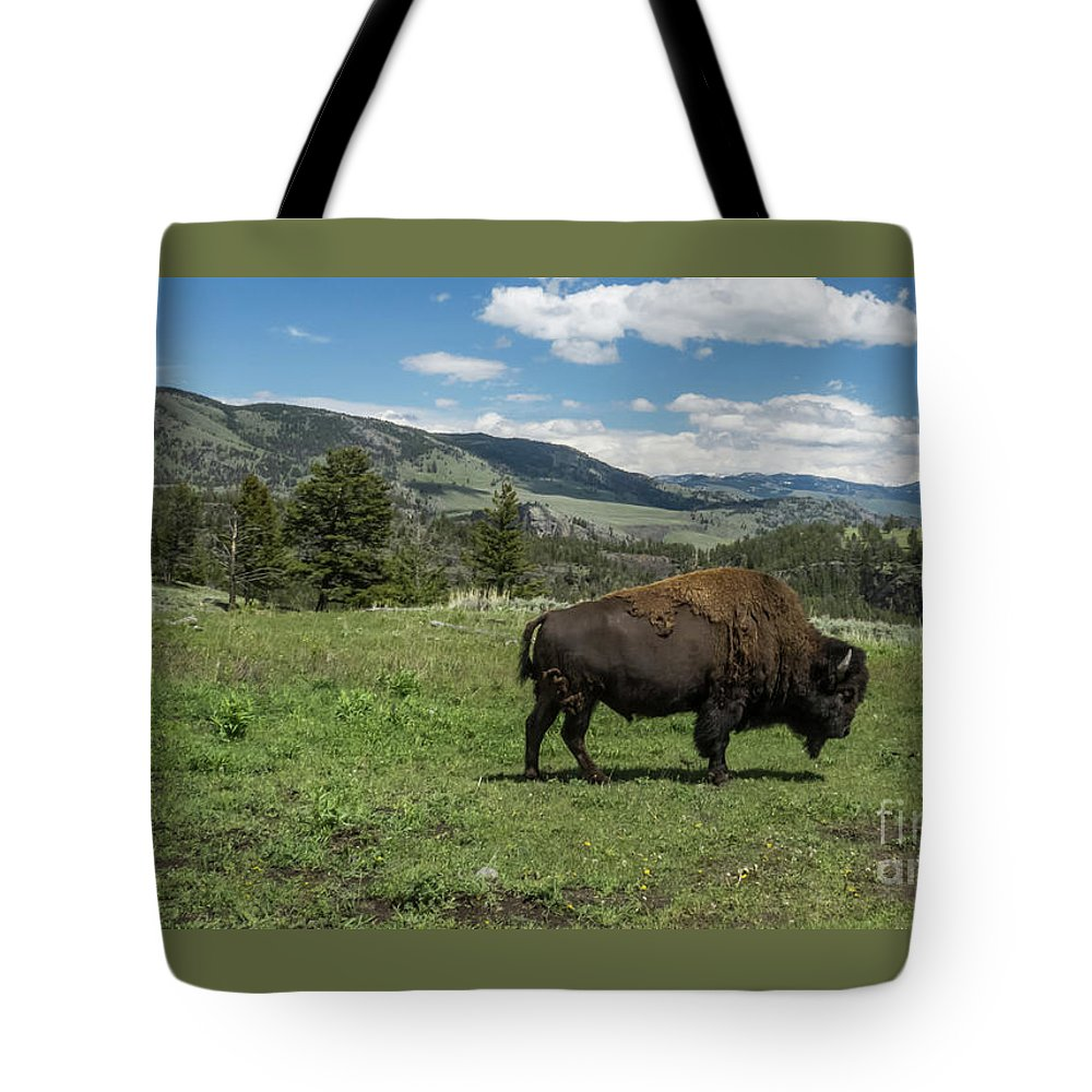 Yellowstone National Park Tote Bag featuring the photograph Lone Bison by Patricia Gould