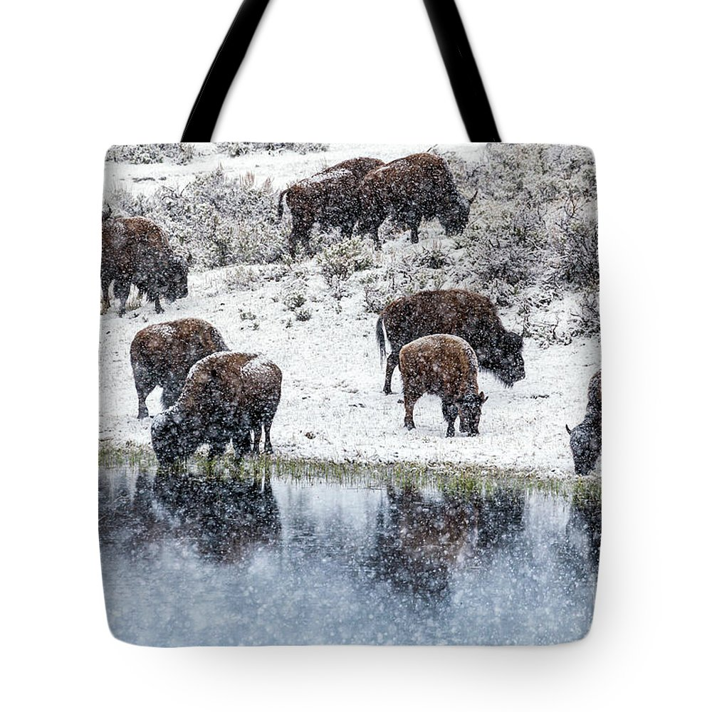 Bison Tote Bag featuring the photograph Bison Snow Reflecton by Daryl L Hunter