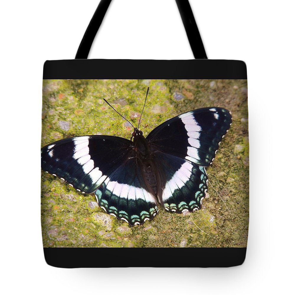Butterfly Tote Bag featuring the photograph Black And White Butterfly by Lisa Gilliam