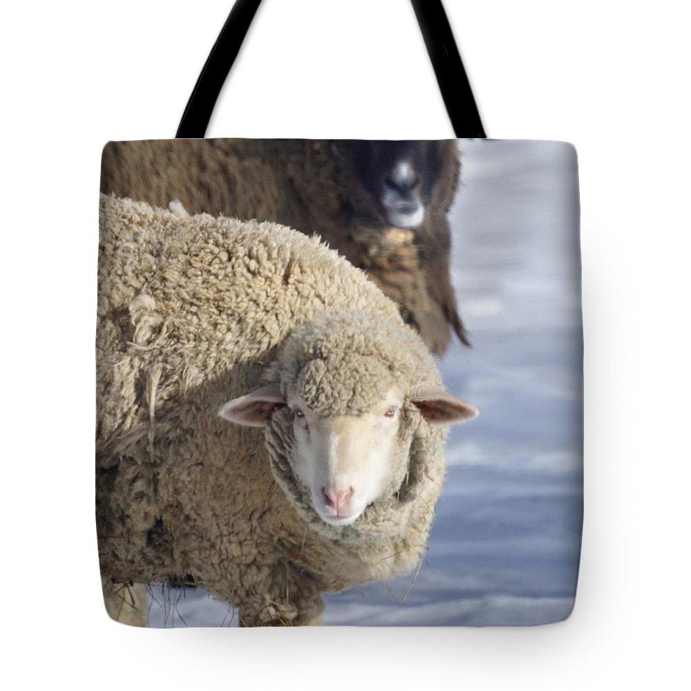 Sheep Tote Bag featuring the photograph Black And White by Heather Coen