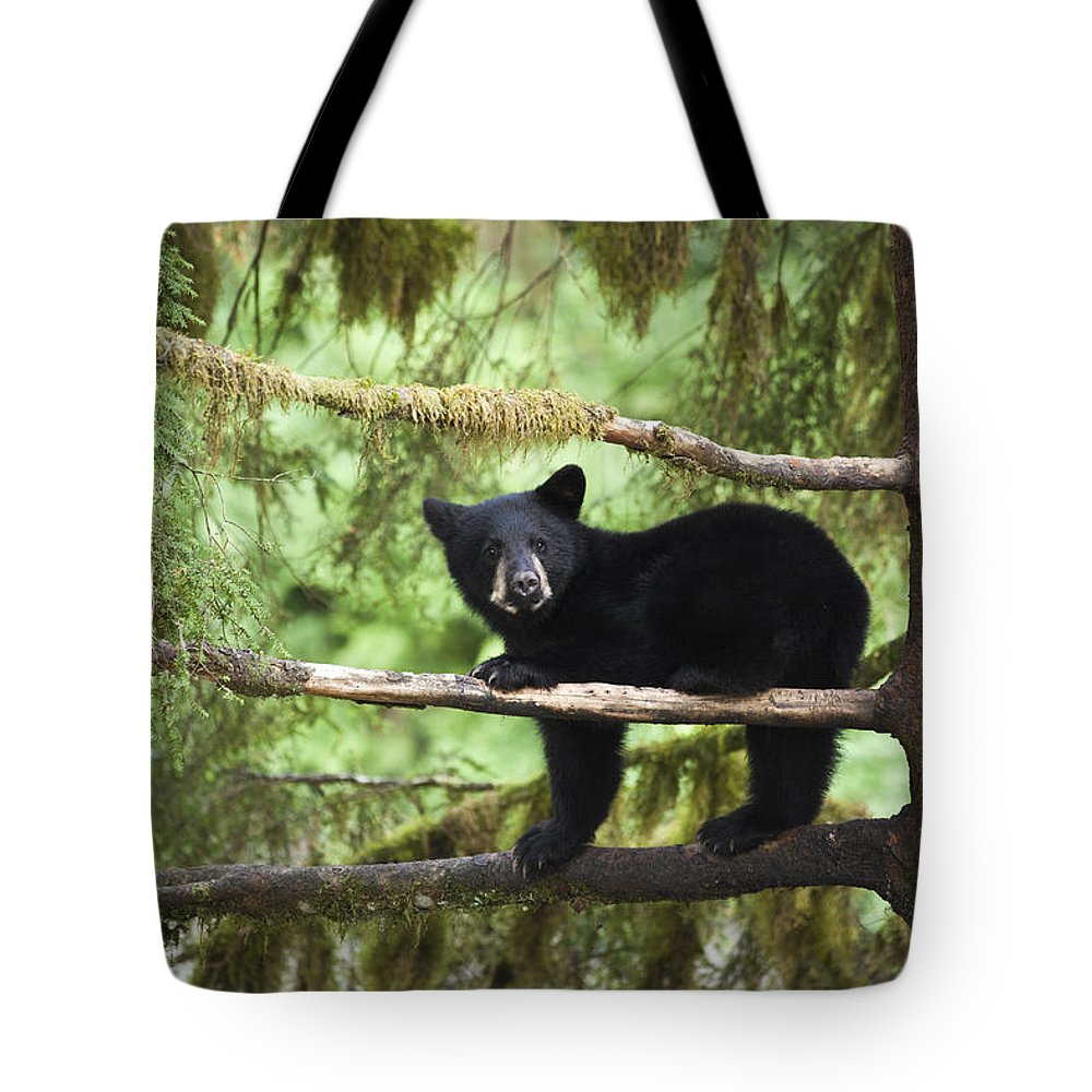 Mp Tote Bag featuring the photograph Black Bear Ursus Americanus Cub In Tree by Matthias Breiter